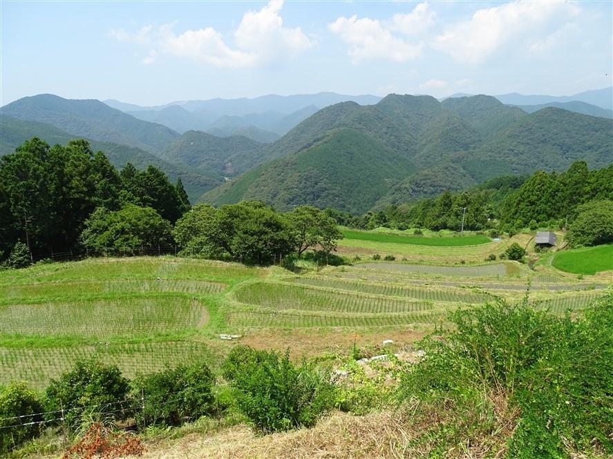 paysage-rizière-japon