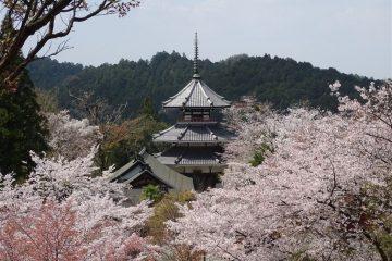 10-jours-au-japon