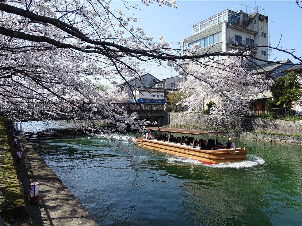 Kyoto et sakura