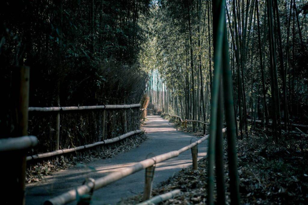 Arashiyama la forêt de bambous