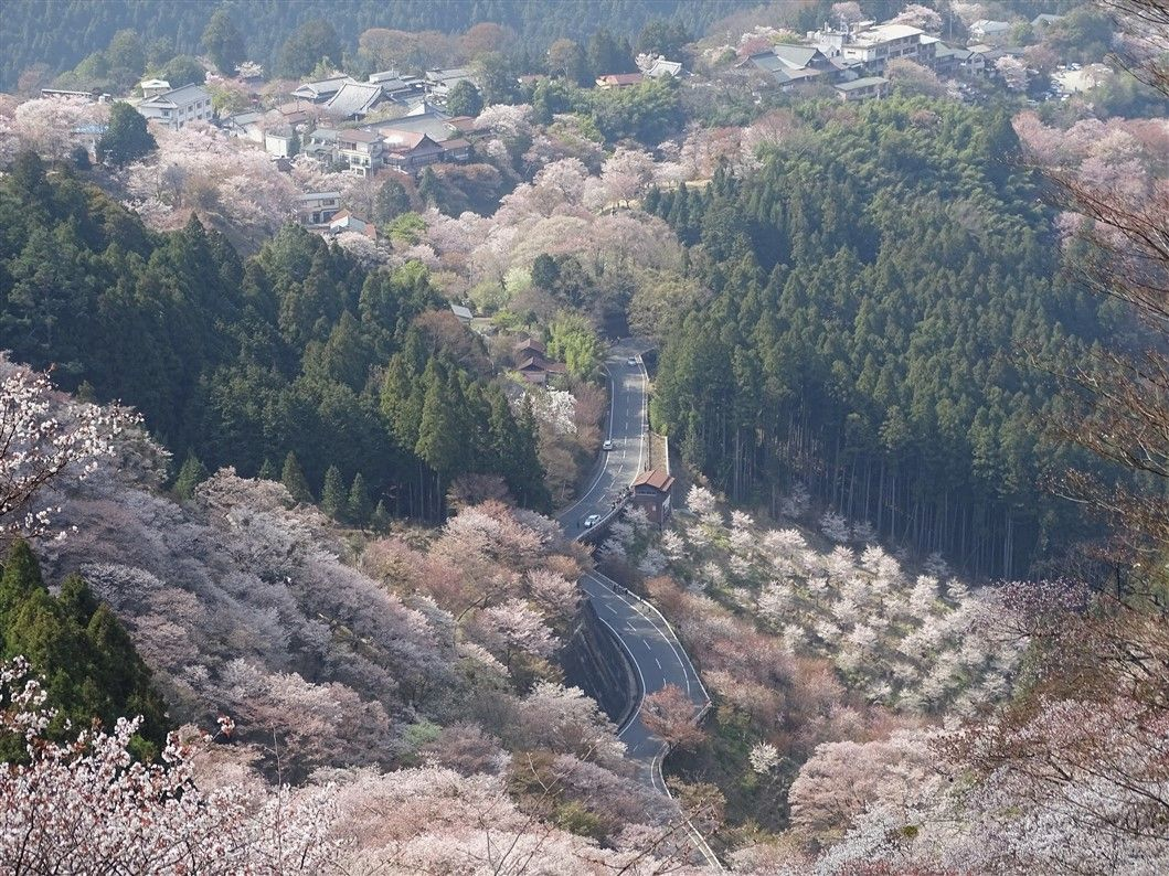 Mont Yoshino – la montagne aux Sakura