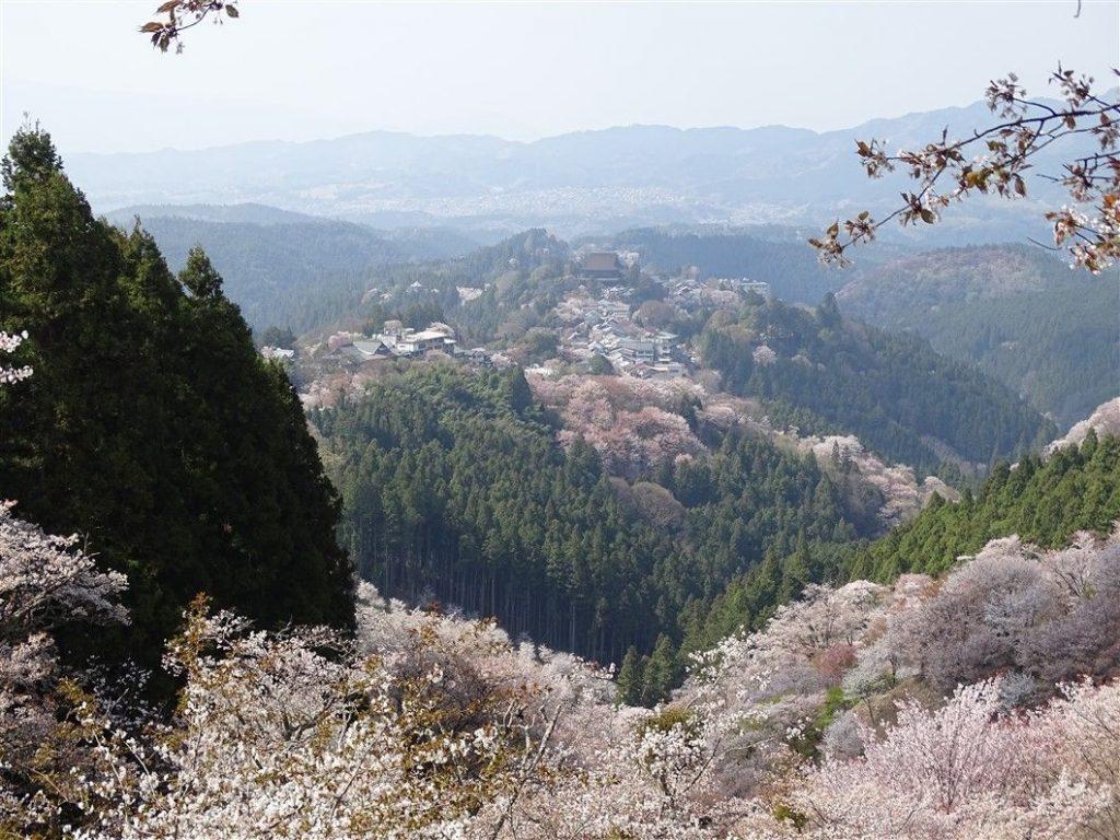 La montagne aux Sakura