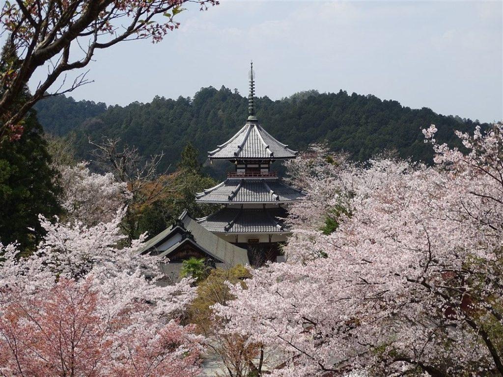 Une pagode entourée de Sakuras