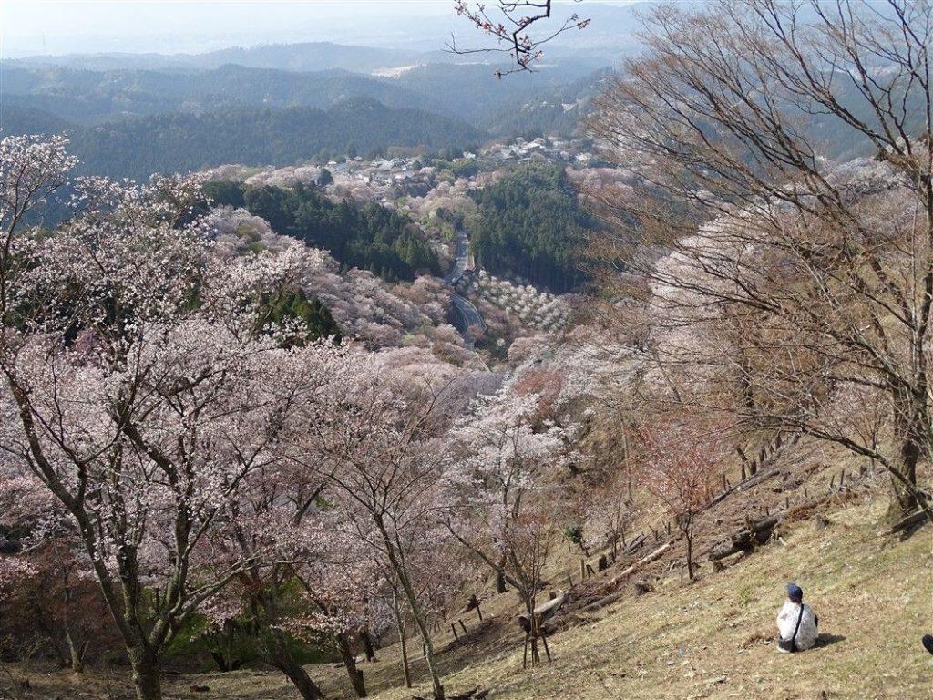 yoshinoyama au japon