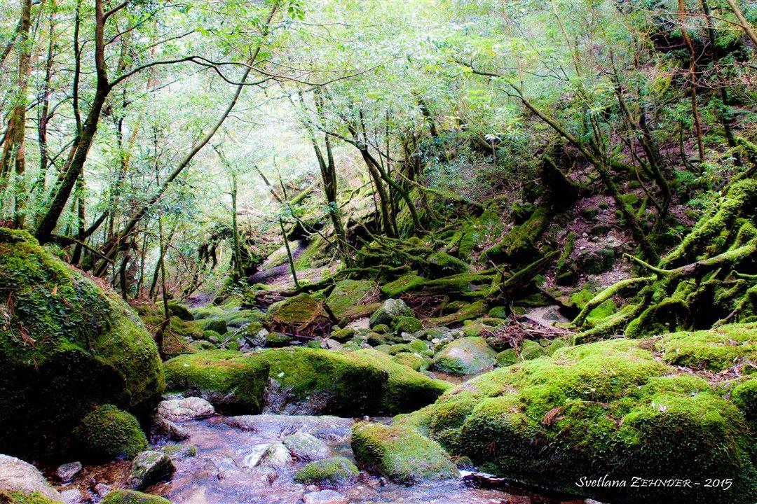 Yakushima – L'île de princesse Mononoke