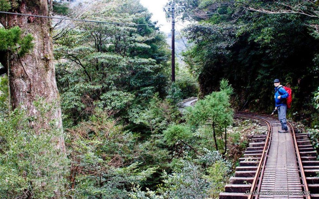 Un chemin de randonnée au Japon