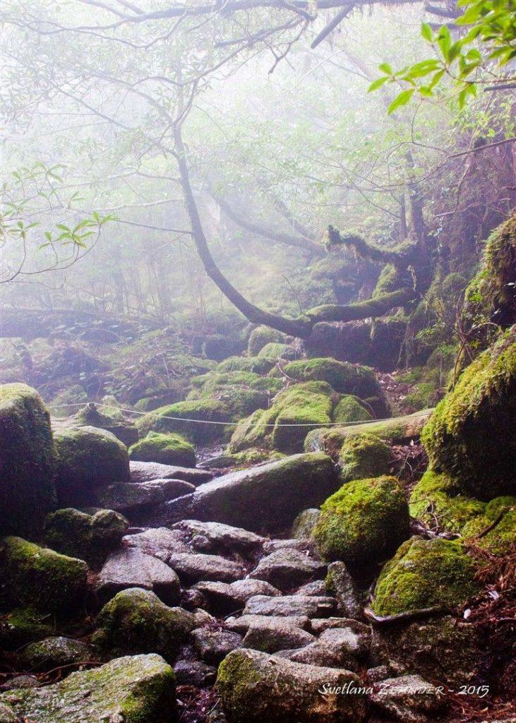 Une randonnée à Yakushima