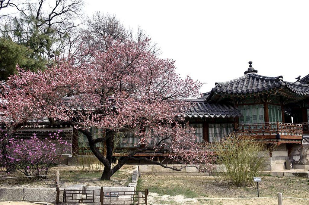 Les fleurs au printemps en Corée