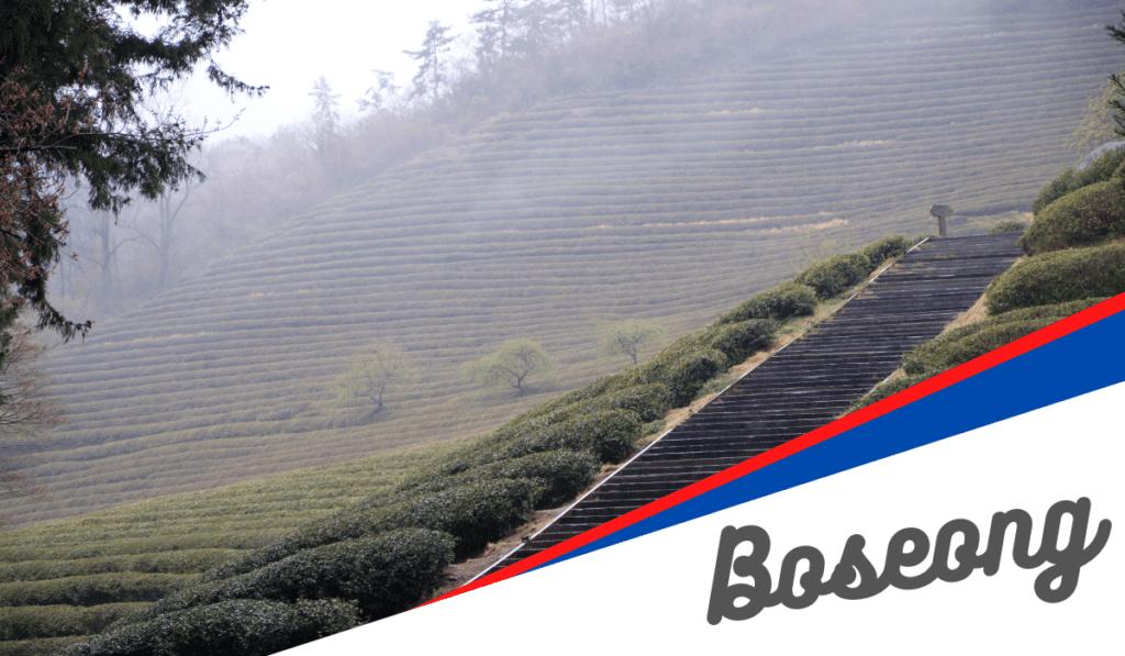 Les Boseong Tea fields